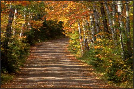 Fall path typd