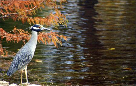 11 28 2008 mill pond_landa park 041.CR2-1