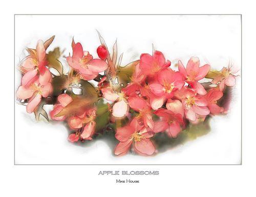 Crabapple blossoma wtr clr copy 850 dpi