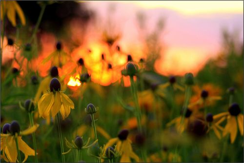 850 ok sunset