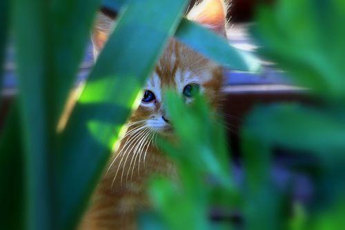 2010_06_15 cats 049 copy