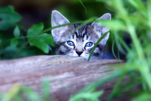 2010_06_15 850 cats 047-1 copy