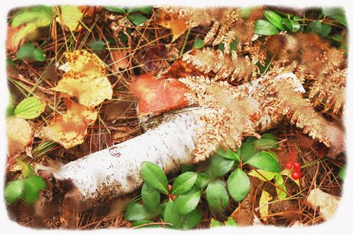 750 dpi birch log w berries watercolor effct wsplat copy a