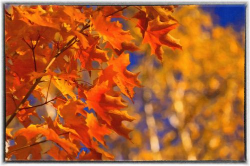 550-a-fall-image-from-11-fa
